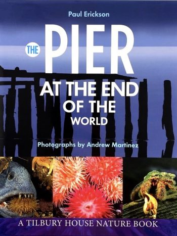 Pier at the end of the World