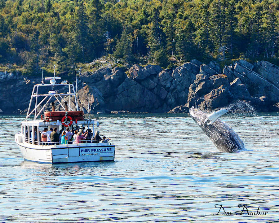 Whale Watch Boat - Passamaquoddy Bay and Bay of Fundy