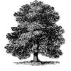 oaktree2